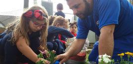 4700:Full Day planta mudas de flores para a Minicidade