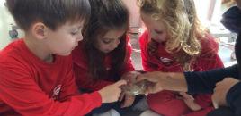 4628:Crianças do Nível 3B analisam as bactérias e os germes