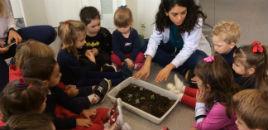 3878:Crianças do Nível 2D aprendem sobre as plantas